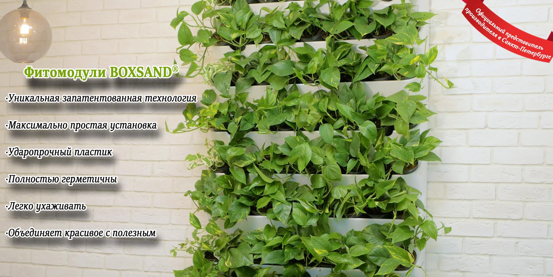 BOXSAND, фитомодули, Вертикальное озеленение, зеленые стены СПб